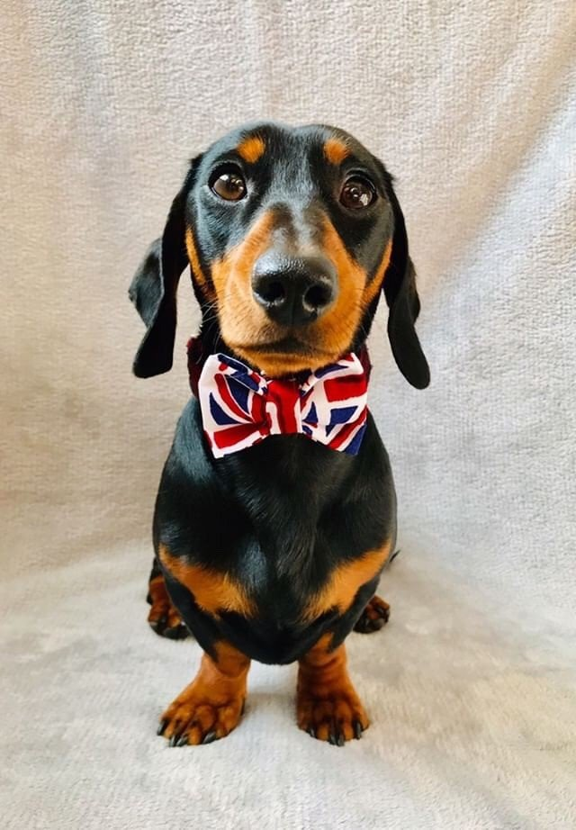 union jack bow tie small